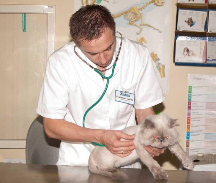 Вызов ветеринара на дом район Кунцево Западном Округе Москвы