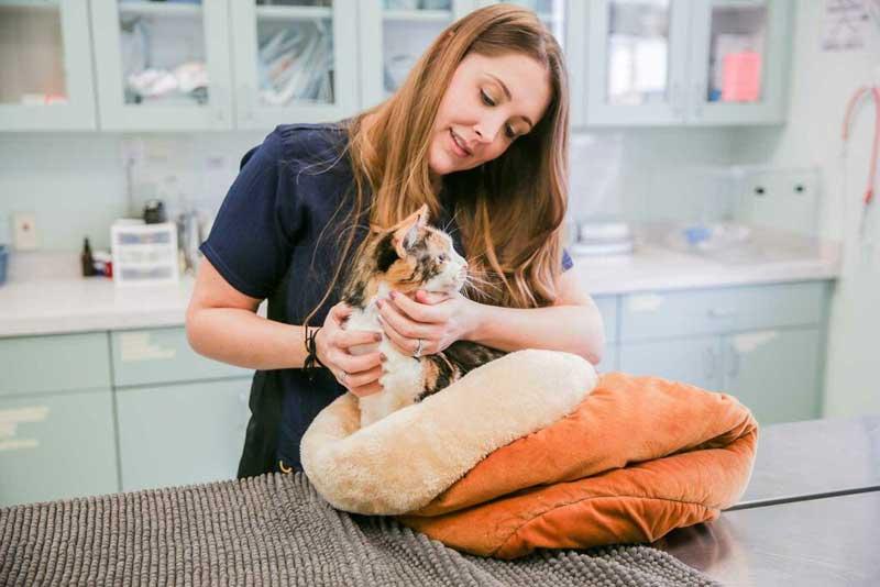 Вызов ветеринарного врача на дом в районе Кунцево (ЗАО)