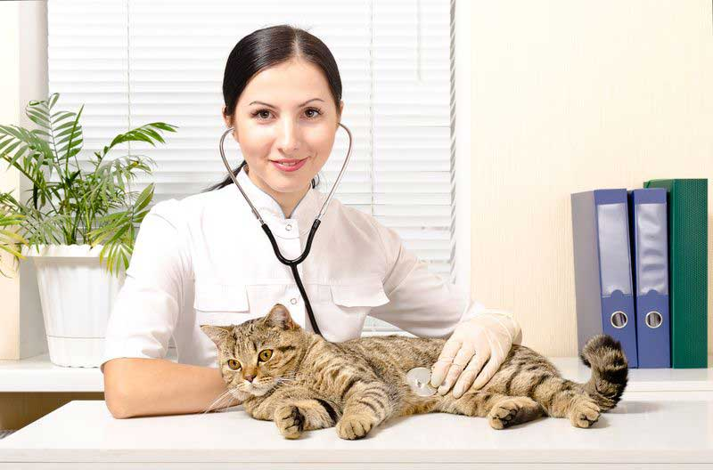 Кастрировать кота на дому в районе Кунцево (не дорого)
