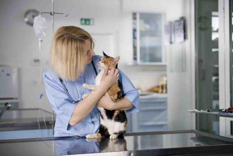 .Стерилизовать кошку в районе Кунцево (ЗАО)