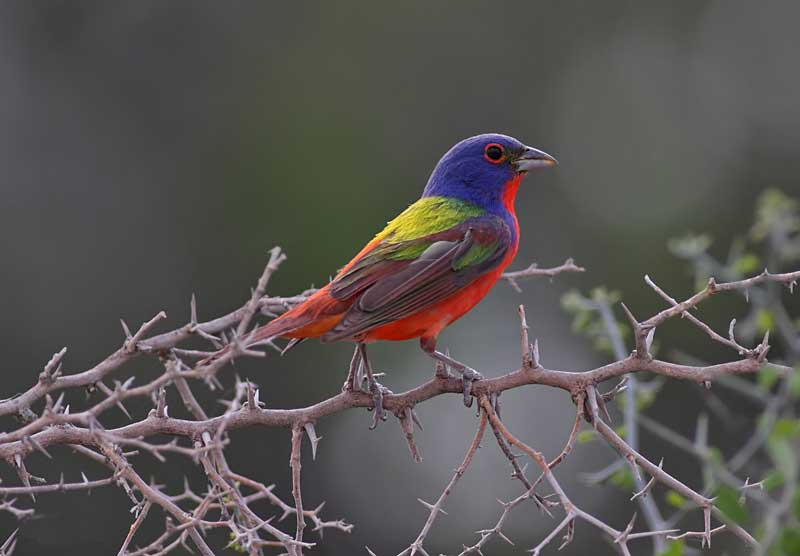 Лечение птиц (перечислить виды) попугай, амадин, карела попугай, волнистый попугай, голуби, неразлучники) в районе Кунцево