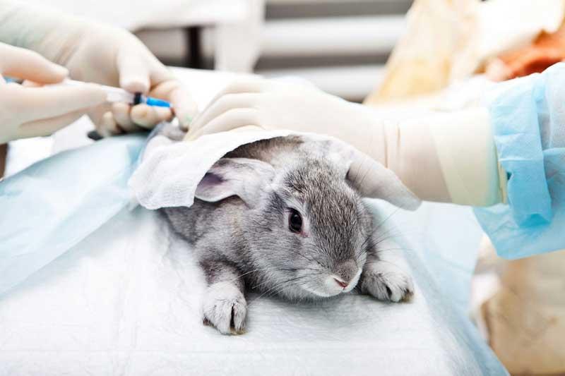 Лечение (кроликов, морская свинка, песчанка, хомяк, хорек, крыса) в районе Кунцево (ЗАО)